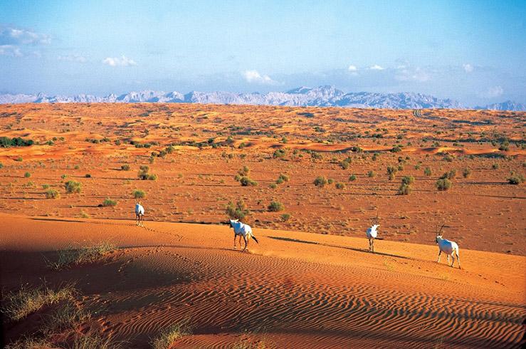 EMIRATES DESERT-18